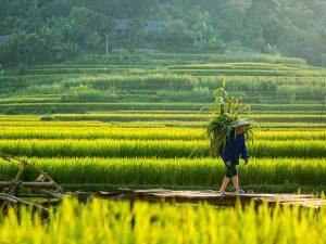 essence-of-vietnam-14-days1